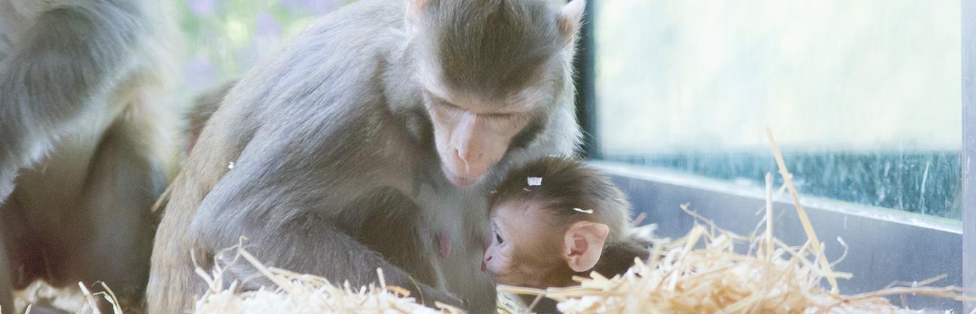 CFM non-human primate biobank UK